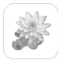 połóż kwiaty